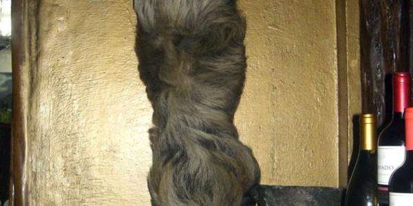 ewok-sloth